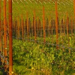 San Diego Event Venues: Vineyards and Wineries